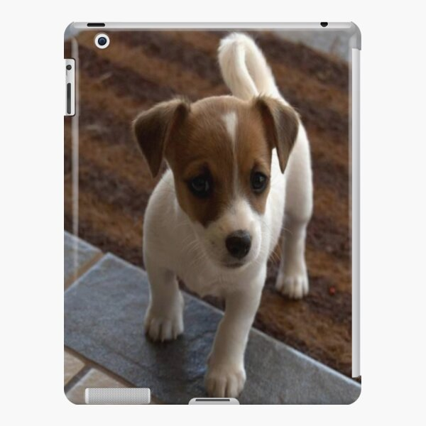 Dog Puppy Baby Jack Russell  iPad Snap Case