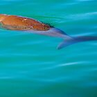 Dugong 2  by D-GaP
