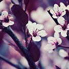 Rumors of Spring by Cadence Gamache