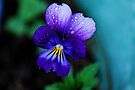 Little Viola by Tori Snow