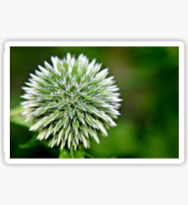 Globe Thistle (Echinops) Seed head Sticker