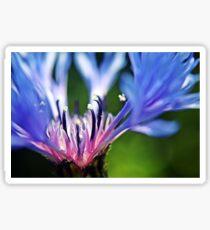 Cornflower Floral Macro Art Sticker