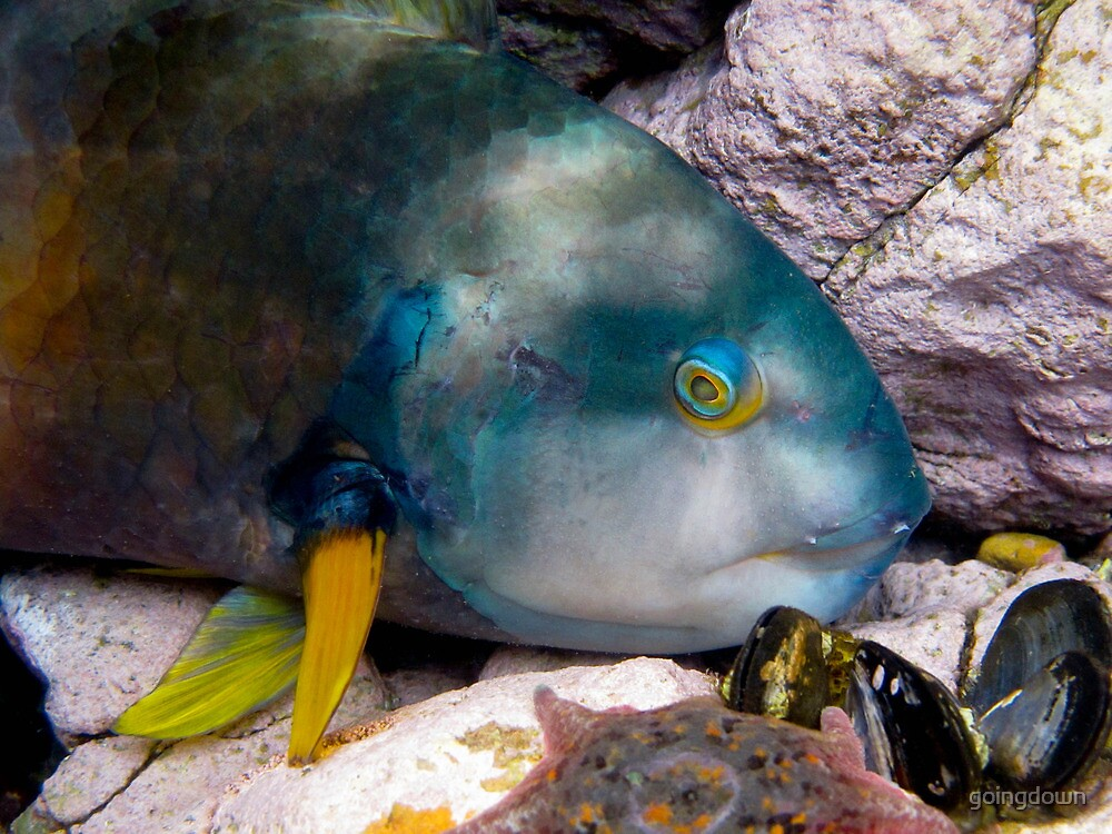 Watching Wrasse by goingdown