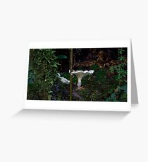 Rain Forest Life Greeting Card