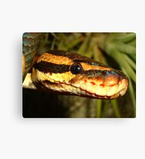 Reptile Royalty Canvas Print