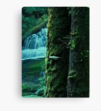Rain Forest Time- doesnt exist Canvas Print
