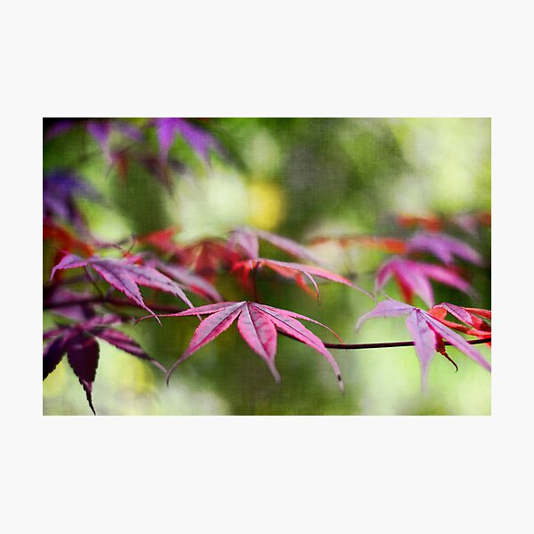 Whispering Leaves Photographic Print