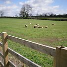 Sheep may safely graze by Ian Lyall
