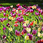 Springtime Happiness  by Cynthia48