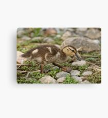 Don't mind me!  Just passing by Canvas Print
