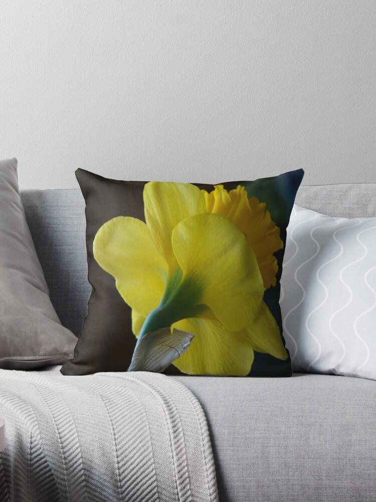 Daffodil by vigor