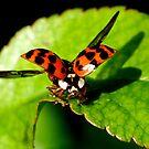 fly by wistine