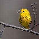 Yellow But Not Mellow by Gary Fairhead