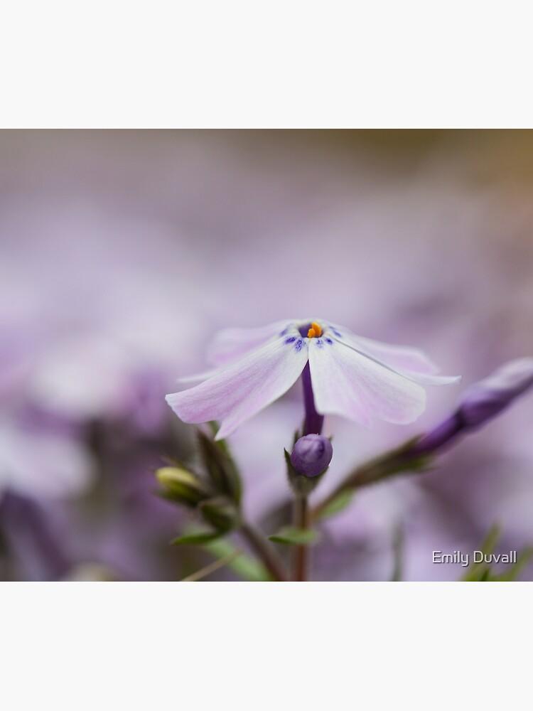 Lavender Spring Flowers by PeaceAndBeauty