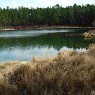 Boykin Springs - The non-camp side by Brandi Beddingfield