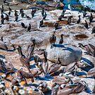 La Jolla Cove Bird Haven by Bill McCarroll