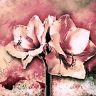 Spanish color splash in bloom old pink by mjvision Mia Niemi by mjvisiondesign