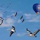 Pelicans in flight. Montage. by johnrf