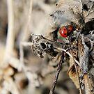 Ladybird Love by WesternExposure