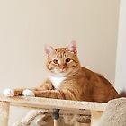 Beautiful Orange Kitty by Tammy  Howell