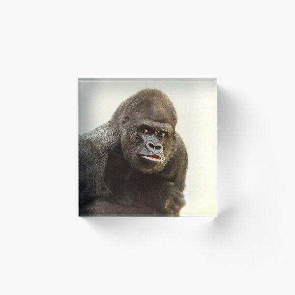 Silverback Ape Gorilla Funny Face Acrylic Block