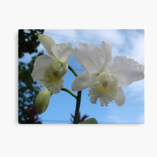 Aloha from the Orchid Isle Metal Print