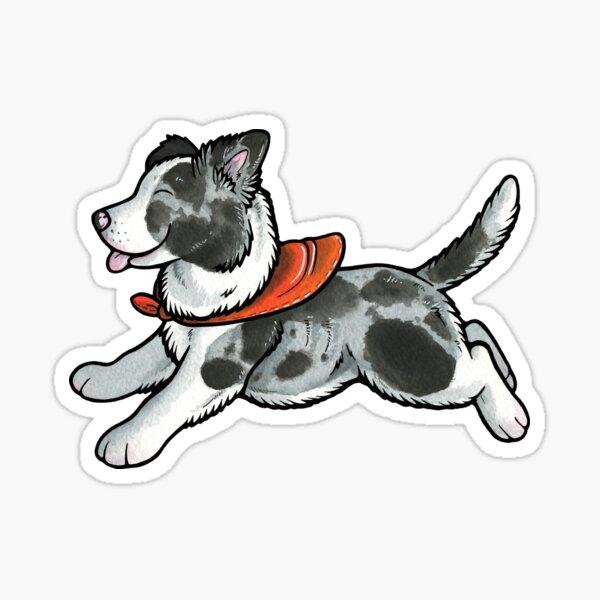 Blue merle border collie puppy Sticker