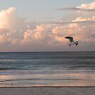 Six seagulls enjoy Kirra beach by Graham Mewburn