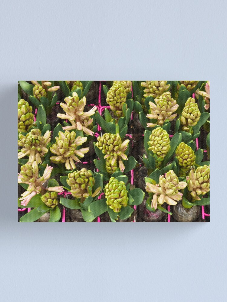 Alternate view of Arranged, square Canvas Print