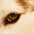 Tiger Eye by Josie Eldred