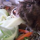 Hansome Getting His 5 A Day by JenaHall