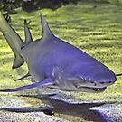 Friendly Shark? by bazcelt
