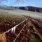 The frozen fence by Michel Raj