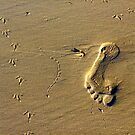 Footprints, big and small by Antionette