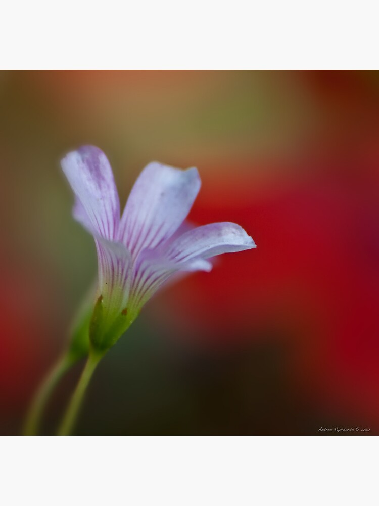 A bokeh for all Moms  by rapis60