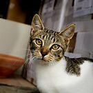 Katze - Haustier von laura-S