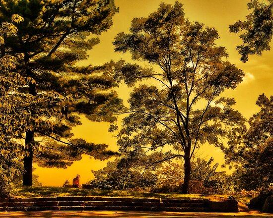 Bussey Hill, Arnold Arboretum by LudaNayvelt