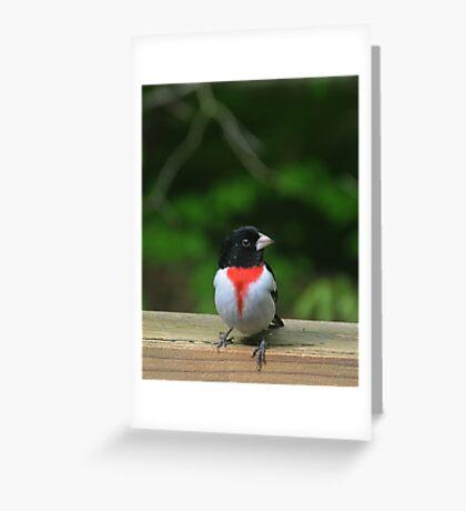 Male Rose-Breasted Grosbeak Greeting Card