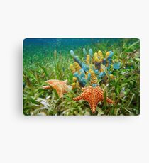 Underwater life with colorful sponges and a starfish Canvas Print
