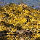 Ocean's Gold by Sue  Cullumber