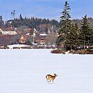 Deer Crossing the Lake by Debbie  Roberts