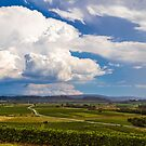 Stormy day in the vineyards of Brda, Slovenia by zakaz86