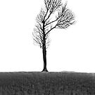 Fragile Tree: From Becoming Unbecoming by ThingsbyUna