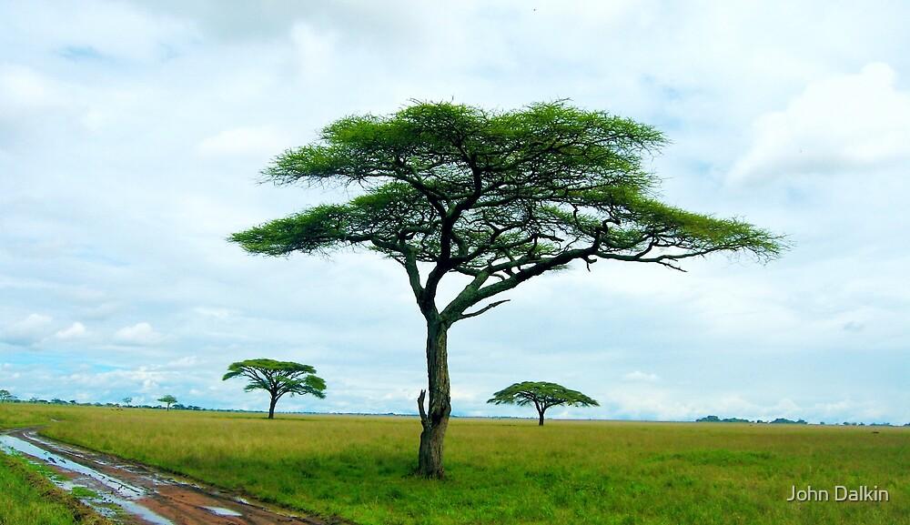 Three Trees by John Dalkin
