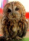 Little Owl by Kerensa Davies