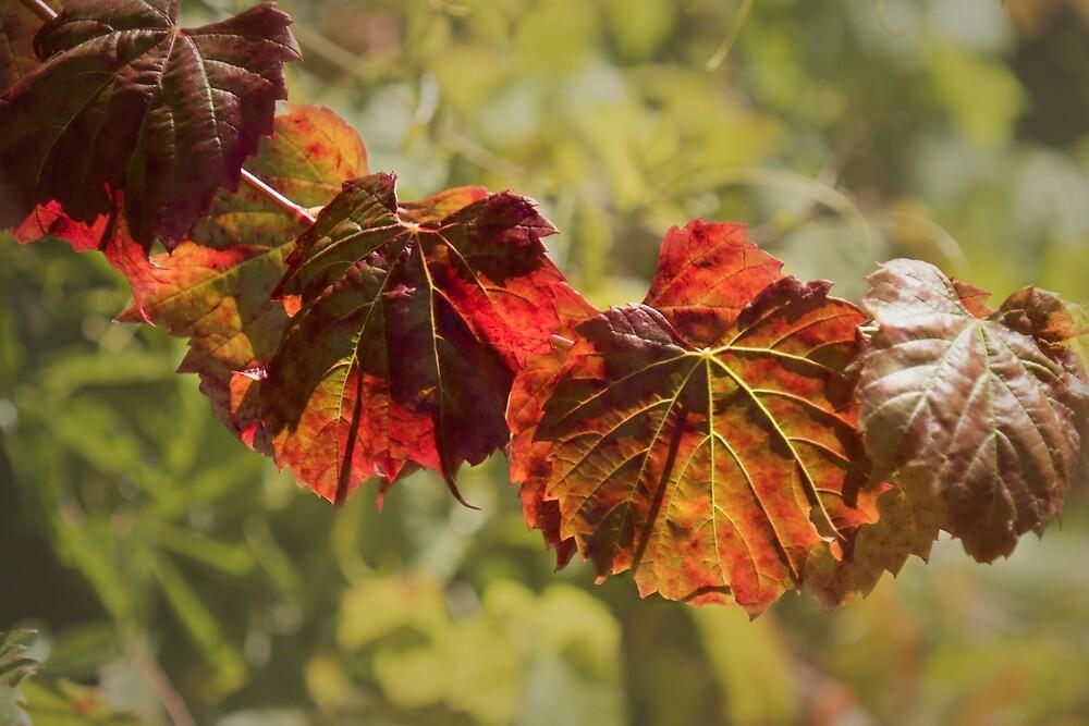 Grape Vine Leaves by Elaine Teague