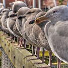 Gull Central by TeresaB