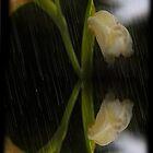 Reflektierende regnerische Orchidee von Al Bourassa