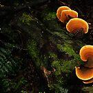 Fungi by michellerena