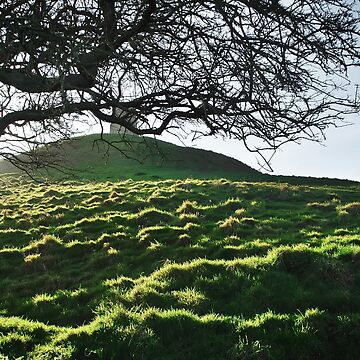 The Glastonbury Tor Hillside by laurasanders